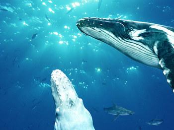 鯨2.jpg